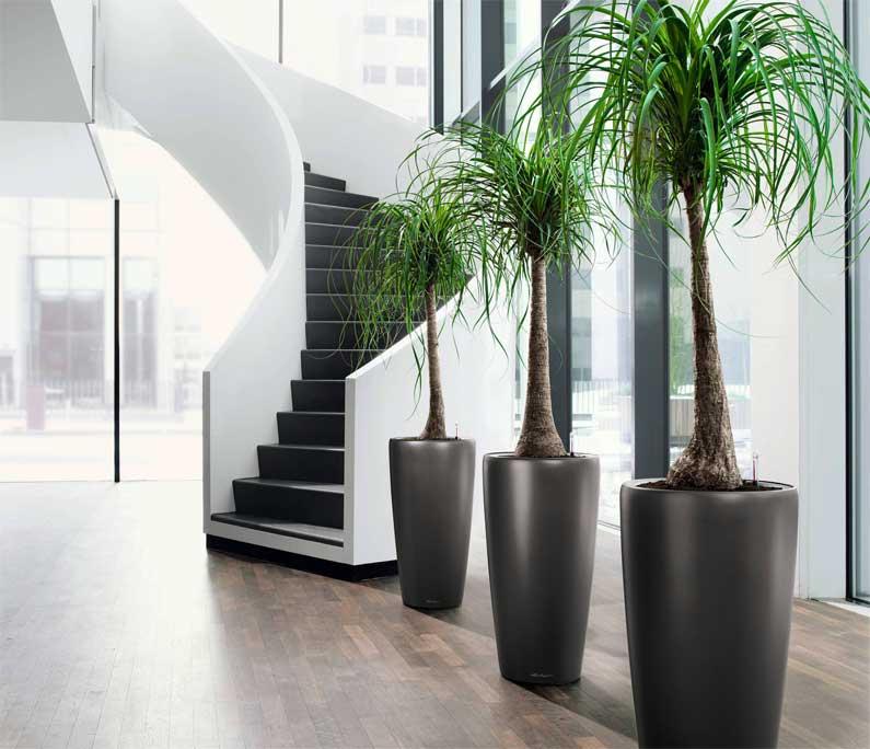 Noleggio piante per arredi floreali di esercizi commerciali, eventi e cerimonie