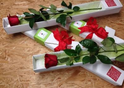 Rosa in Box